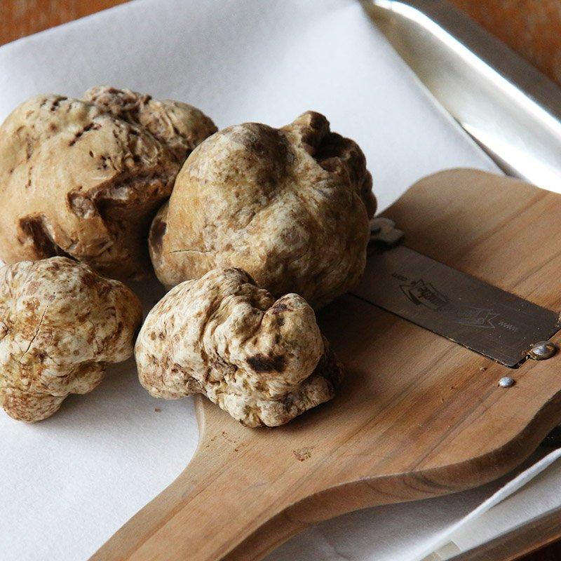 Il tartufo: fungo o tubero?
