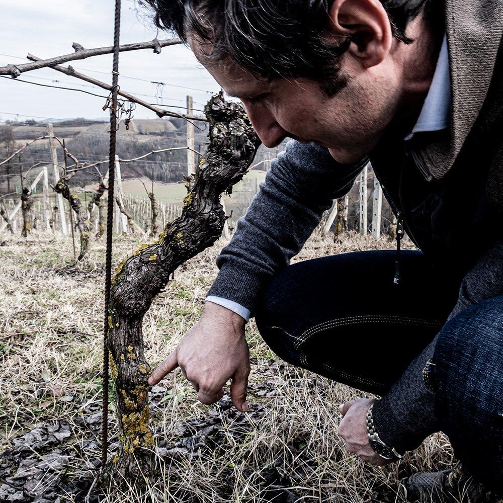 I vitigni coltivati sono solo quelli autoctoni e tradizionali